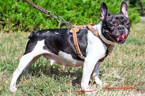 Per carlini, buldogg o altri cani a setto nasale breve molto meglio la pettorina anziché il collare