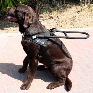 Pettorina per cani guida