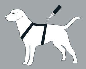L'attacco di una pettorina ad H, ideale sul tronco del cane e mai davanti